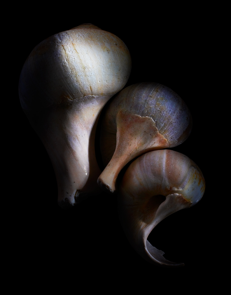 Shells01-06-09-002376-2.jpg