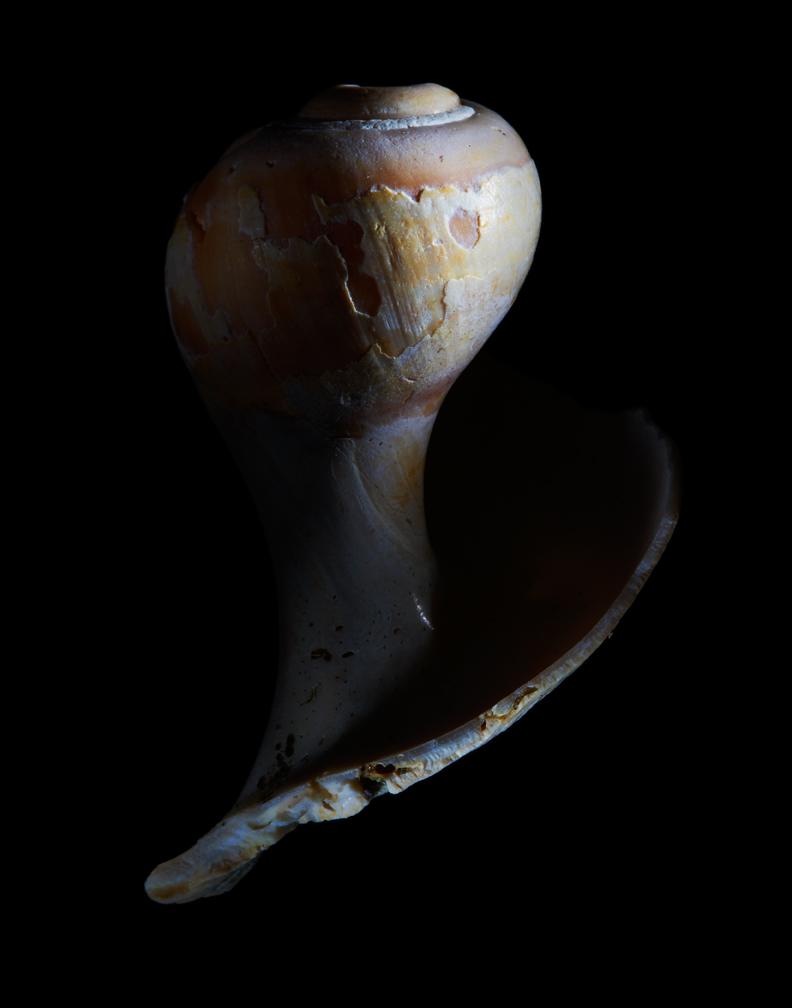 Shells01-06-09-002772.jpg