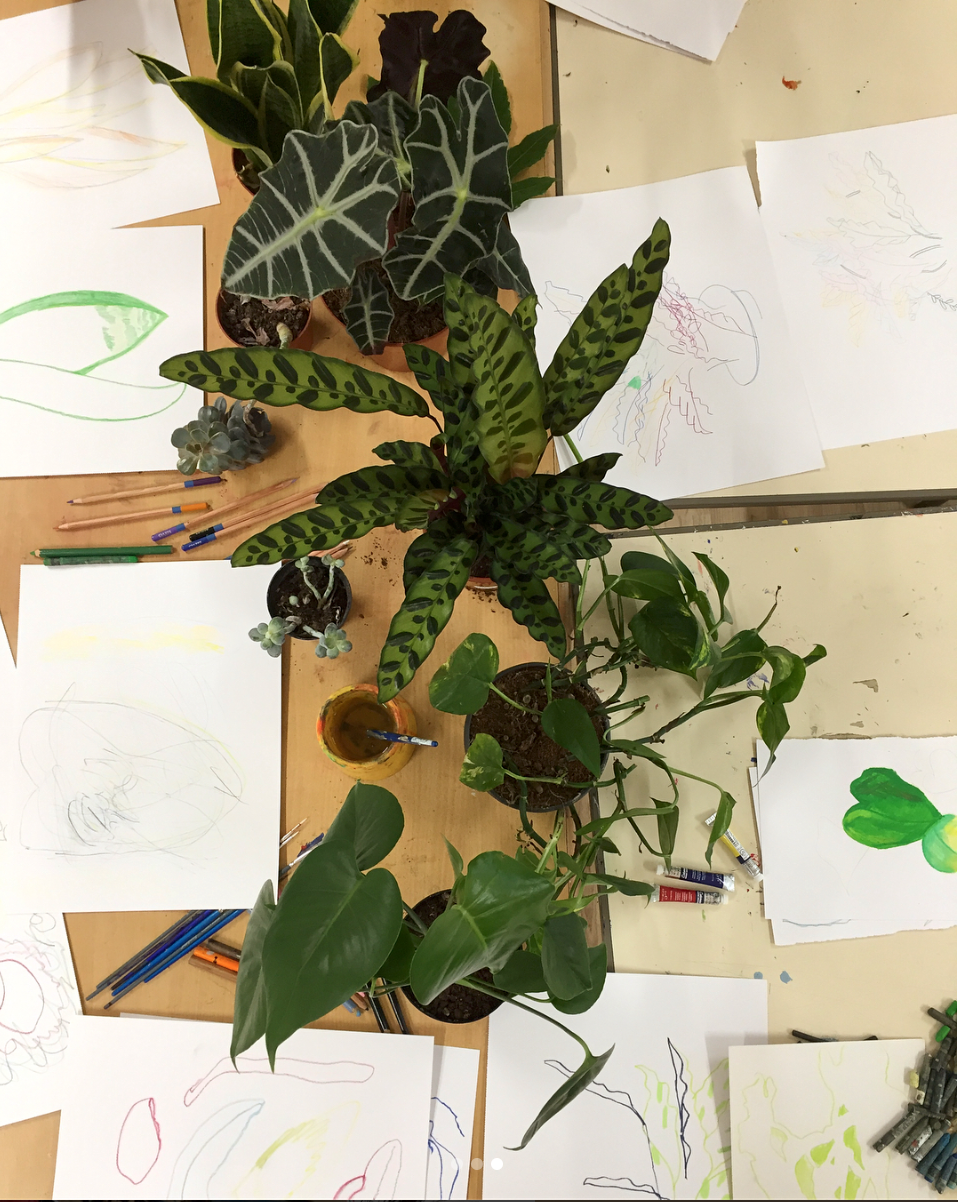 After completing her work at Eileen Skellern 1 Tamsin ran a second workshop for patients on the ward, drawing and painting plants from still life.