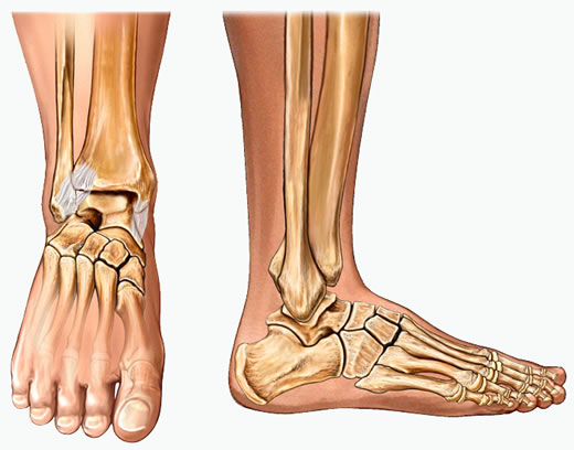 Foot & Ankle Sports Injuries.