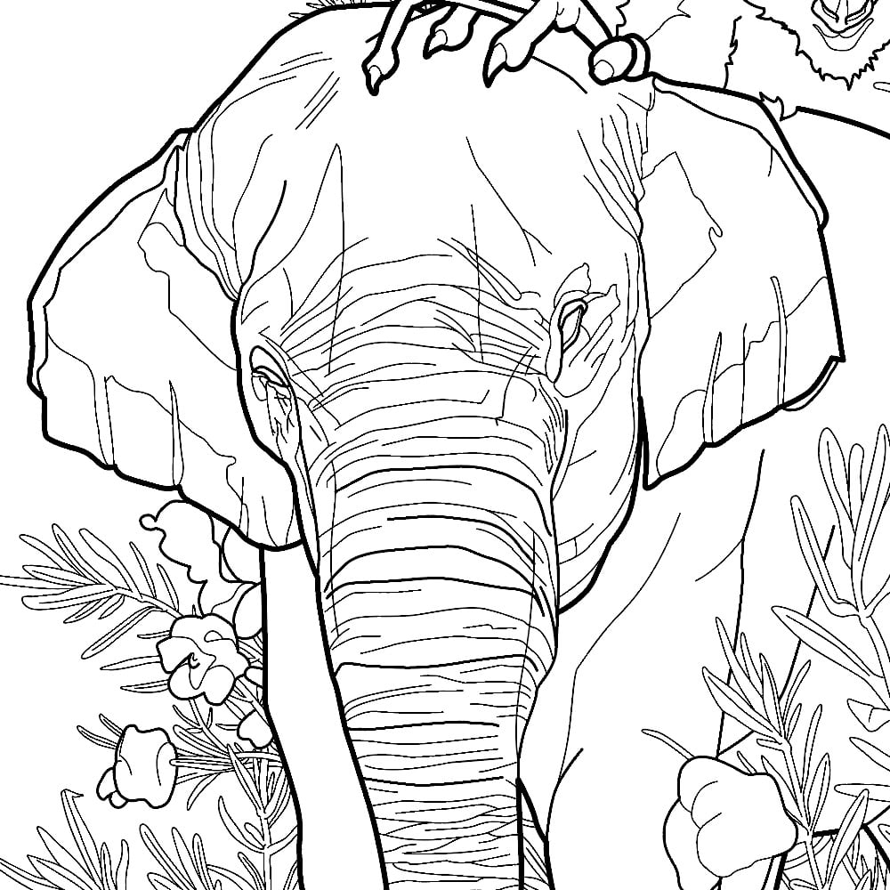 asian animals coloring pages - a coloring book for people who love animals e is for