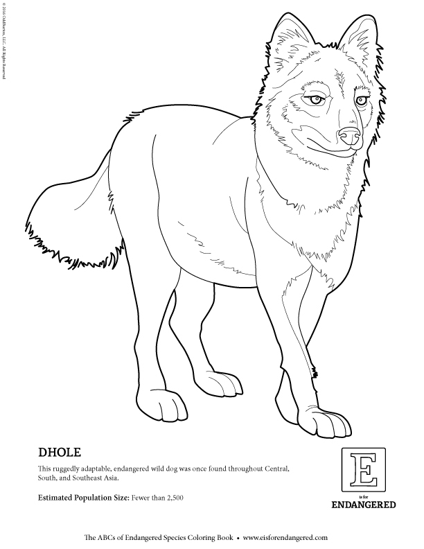 dhole animal coloring pages. dhole jpg Blog  E is for Endangered