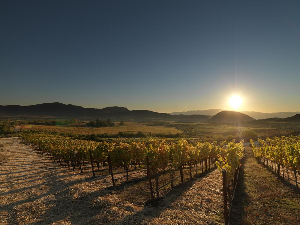 Acumen Edcora vineyard.jpg