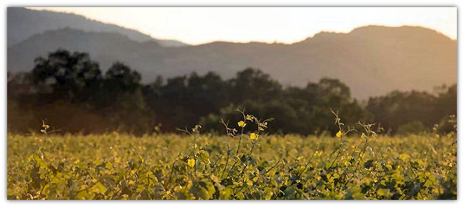 vineyard_hills.jpg