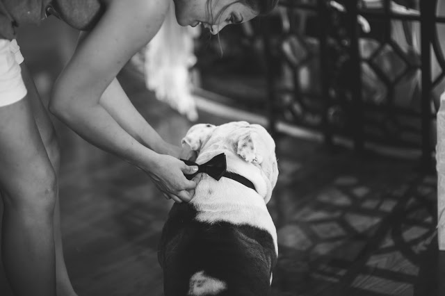 Bride getting her dog ready for the wedding