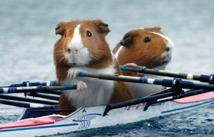 hamsters rowing