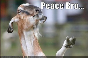 goat-gives-peace