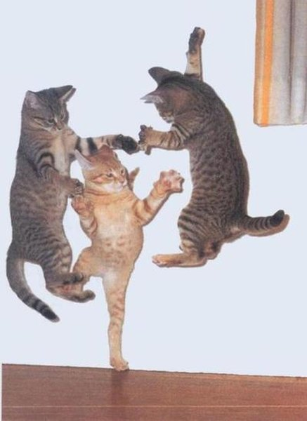cat-jump-around
