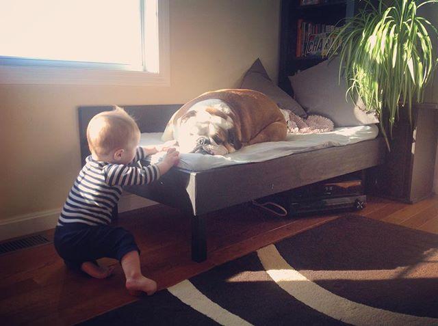 Best buds! #charlie #englishbulldog #englishbulldogofinstagram #mansbestfriend #cooper #bulldog #myboys