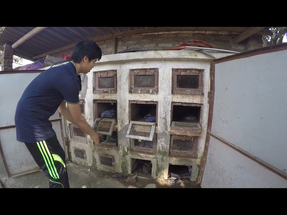 Video stills of snake cages in Hanoi's snake village. Credit: Josephine S Crouch