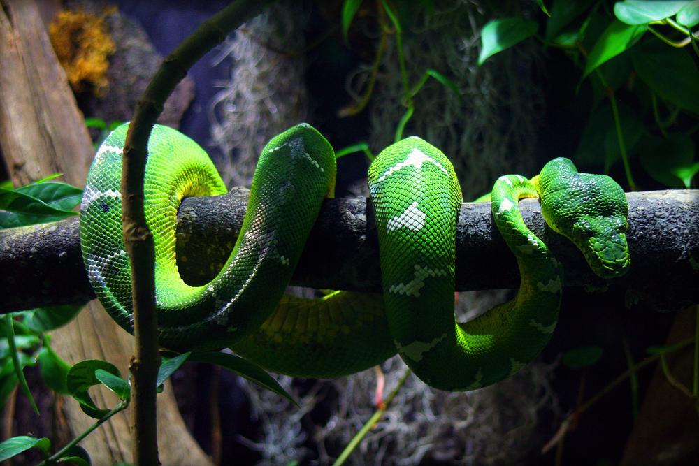 Python Skin looks better on the Python Credit:Kathleen Franklin