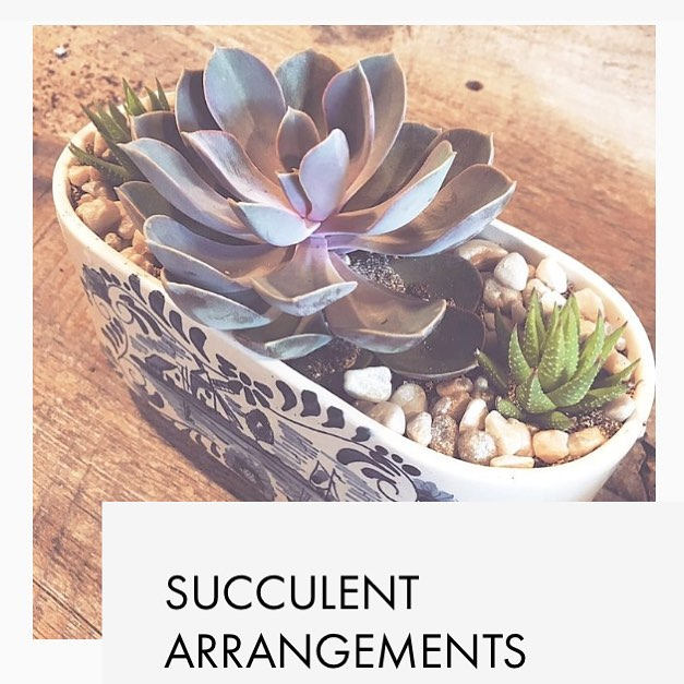ADMINISTRATIVE PROFESSIONALS DAY --April 25th --we have teamed up with @lifeissucculent to help you celebrate your administrative assistant with a beautiful arrangement that symbolizes endurance + adoration | A beautiful addition to their space + remind them that their hard work is an inspiration to everyone | link in bio to place an order {delivery available}
