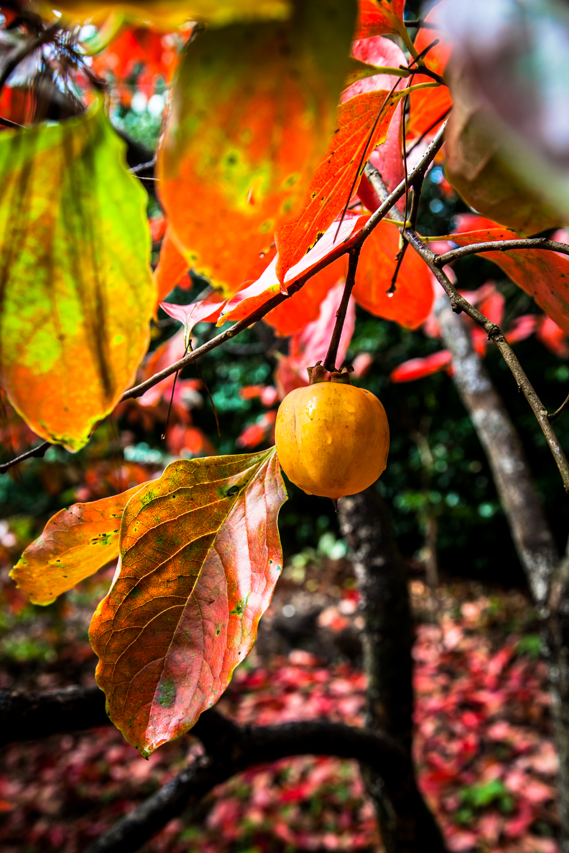 Autumn_2014_KH-10.jpg