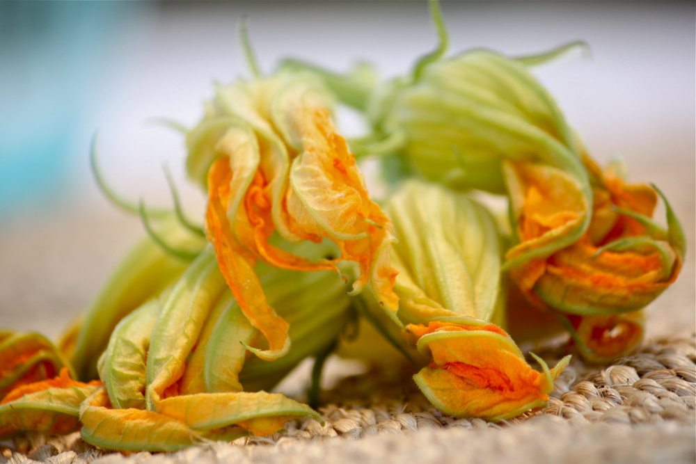 Food--Zucchini blossoms--Ksenija Hotic.JPG