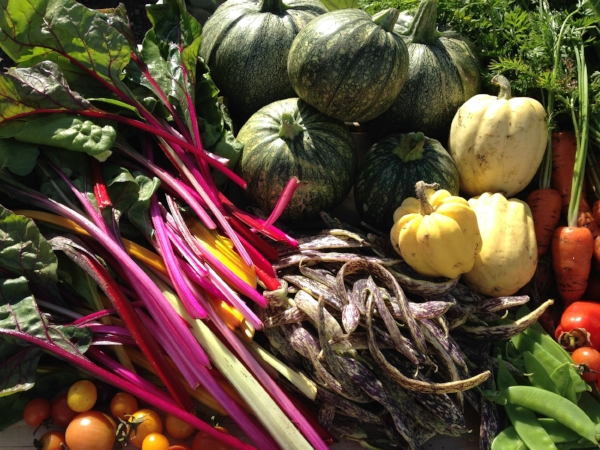 The food from Cultivating Roots Community Garden makes it to gardeners' kitchens and local food banks the same day that we harvest it.