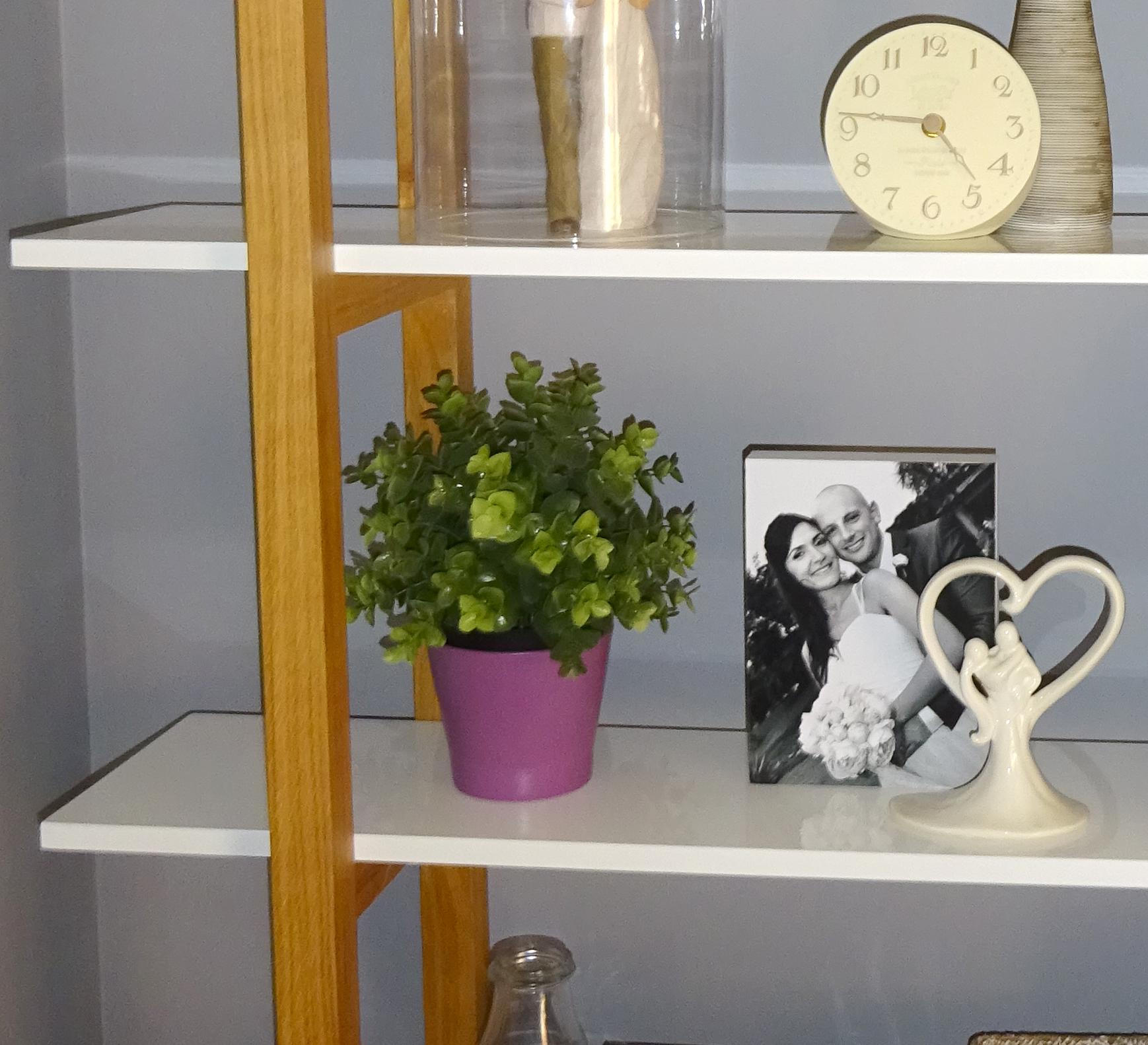 bookshelf plant blog