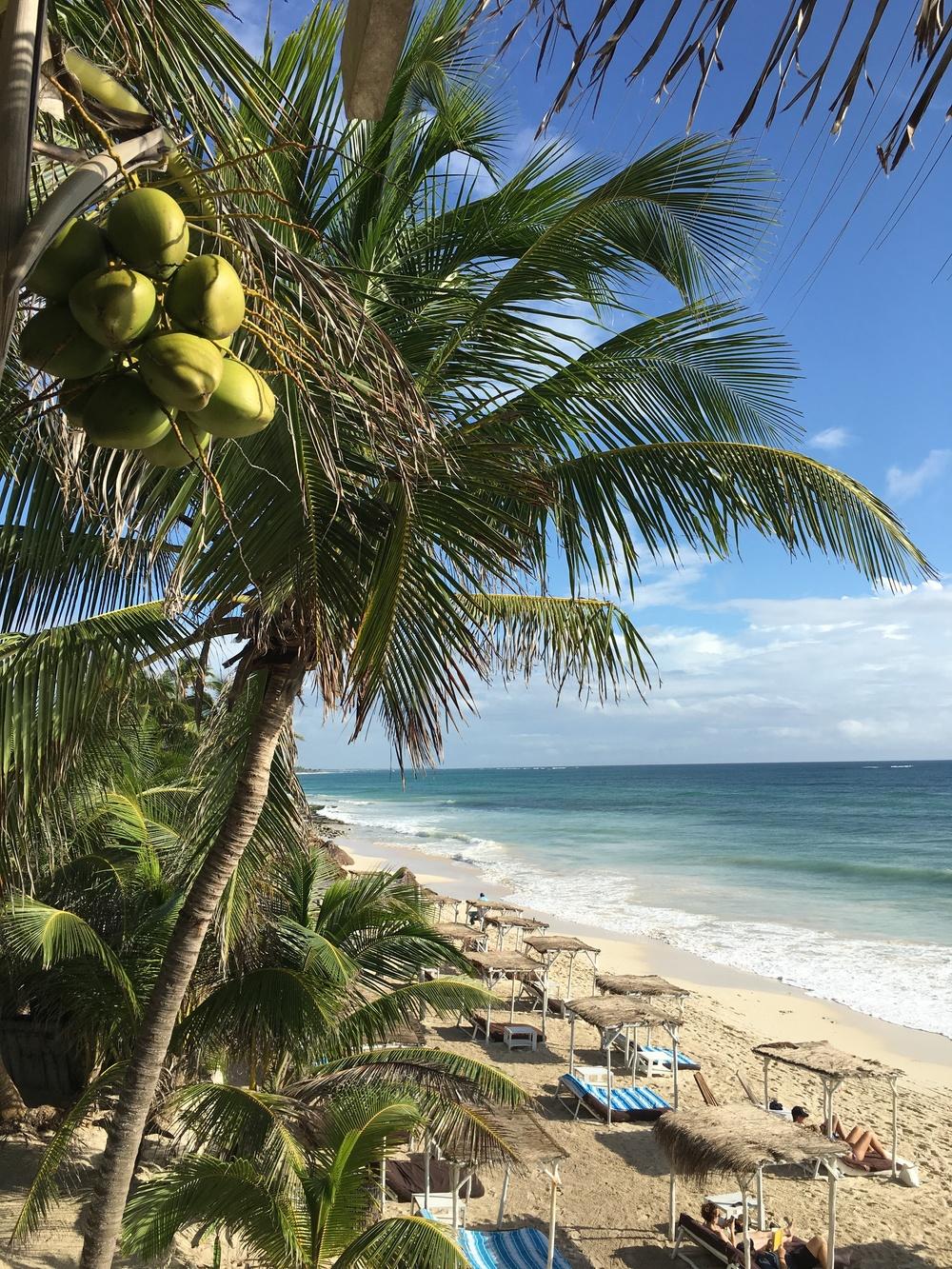 View from the top bar at Papaya Playa
