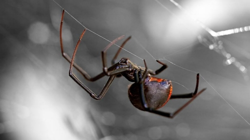 black-widow-sideways-web.adapt.945.1.jpg