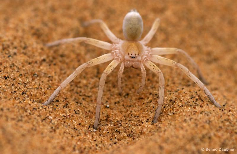 golden spider.jpg