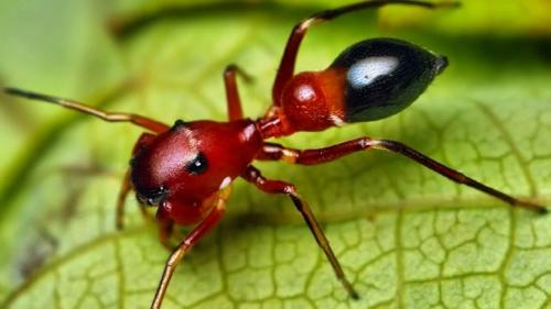 ant mimic home.jpg