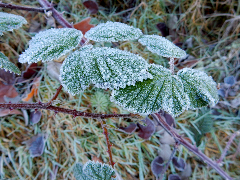 Most of the plants were covered with frost