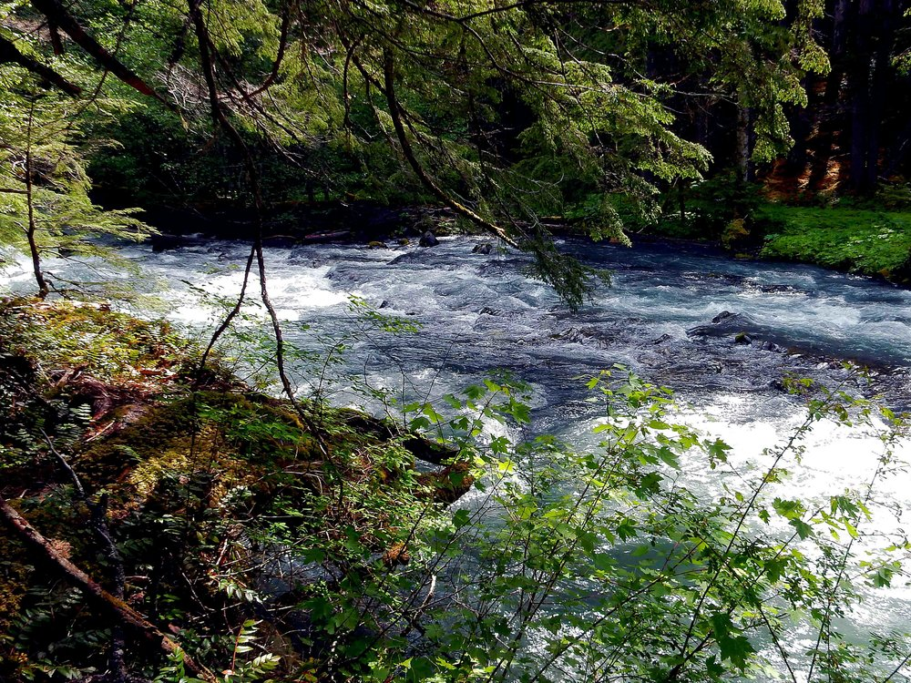 SUMMER - Dungeness River