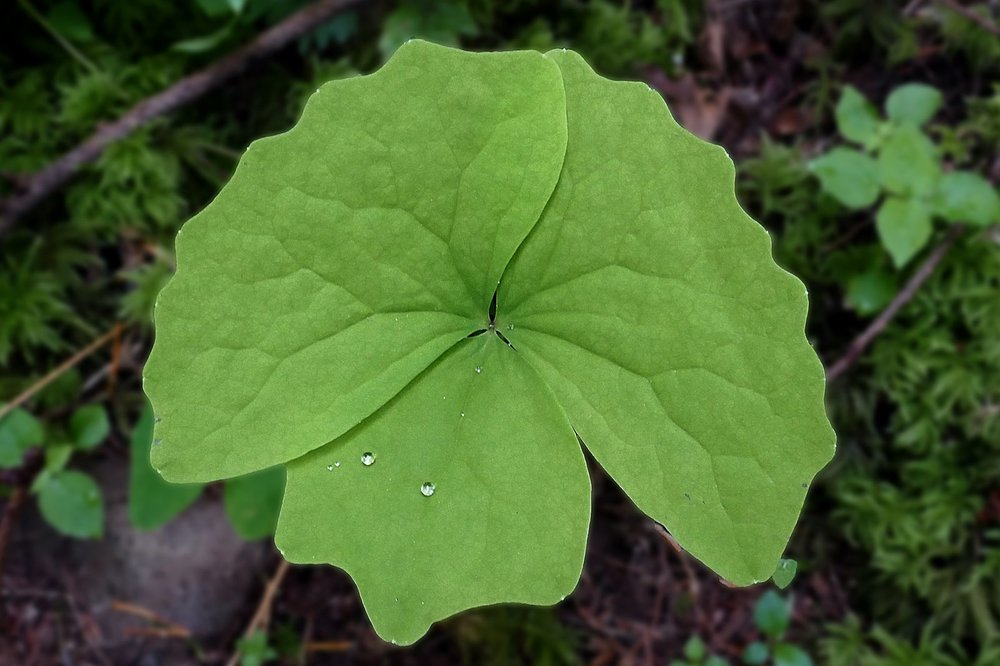 A pretty leaf with water droplets