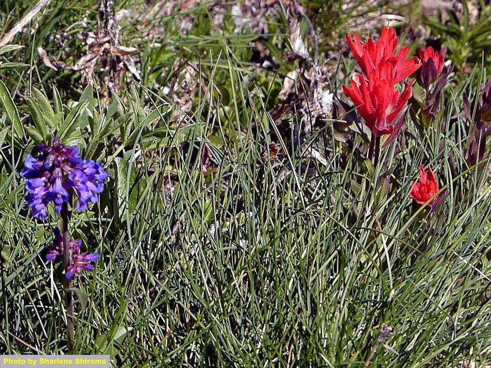Pretty flowers were everywhere