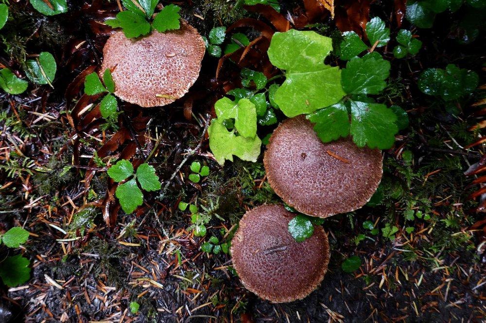 OK, this is the last mushroom photo