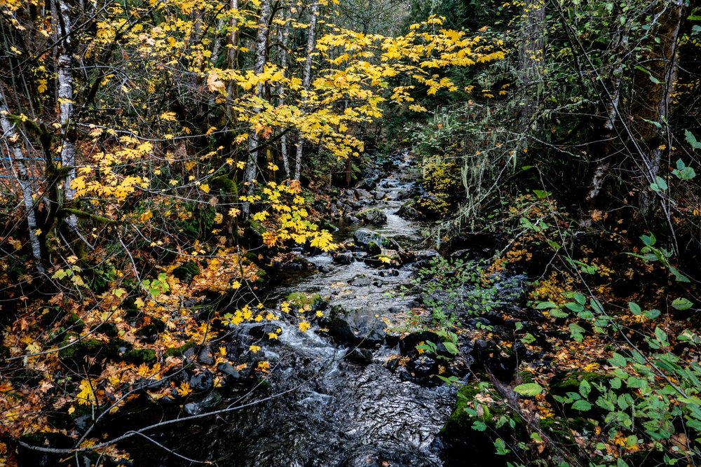 Rocky Brook with the fall colors