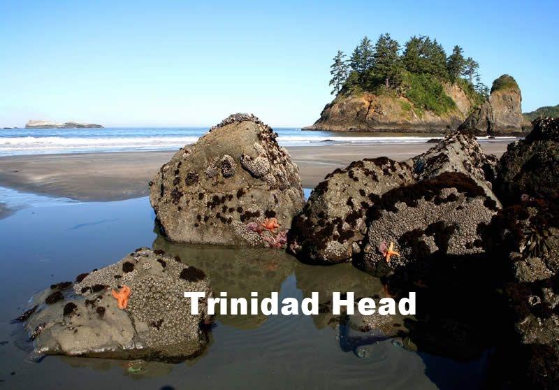 Trinidad Head Star Fish Bob Wick.jpg