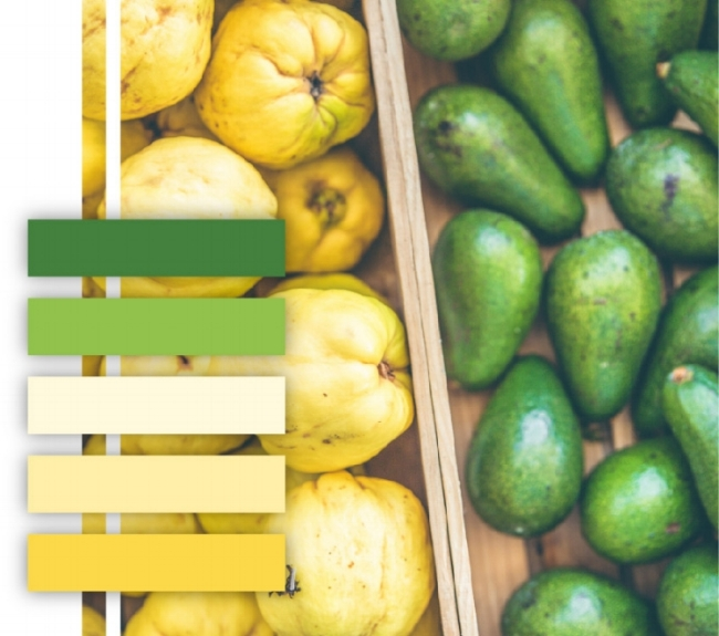 Green and yellow color palette, avocado, squash, produce, color scheme