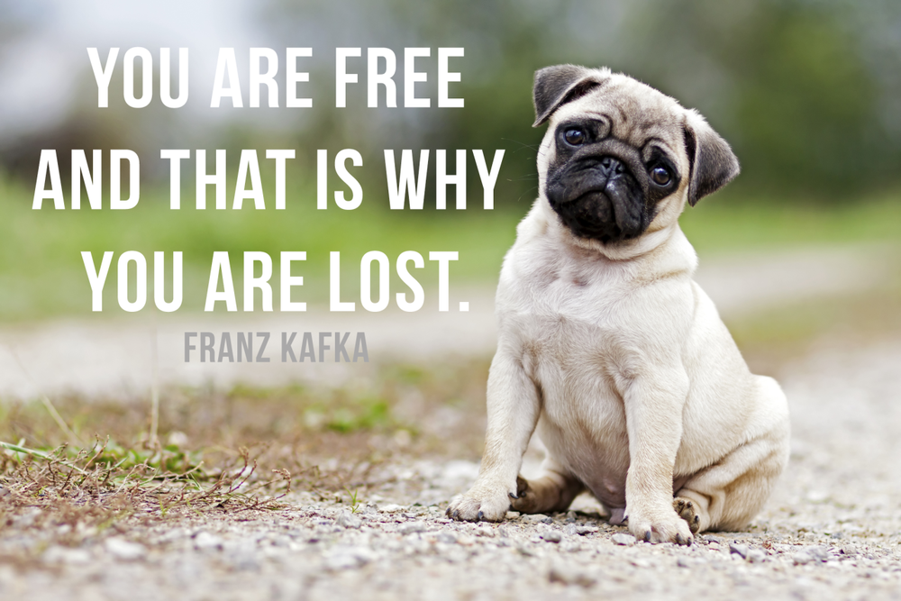 kafka quote with pug, counseling columbia mo