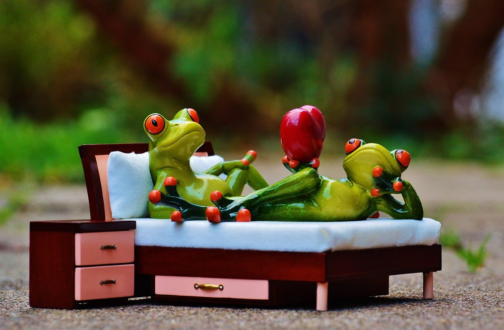 toy frog on bed, couples counseling columbia mo