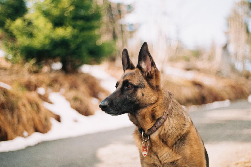 dog looking, dog