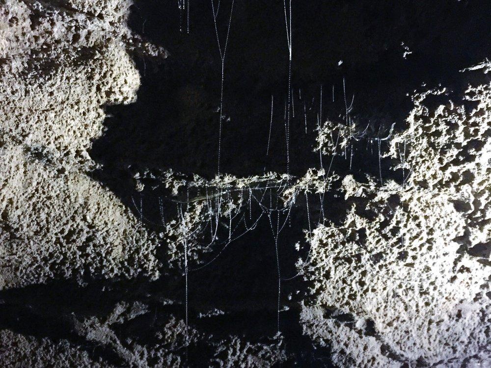 Glowing Worms in Ruakuri Cave, Waitomo