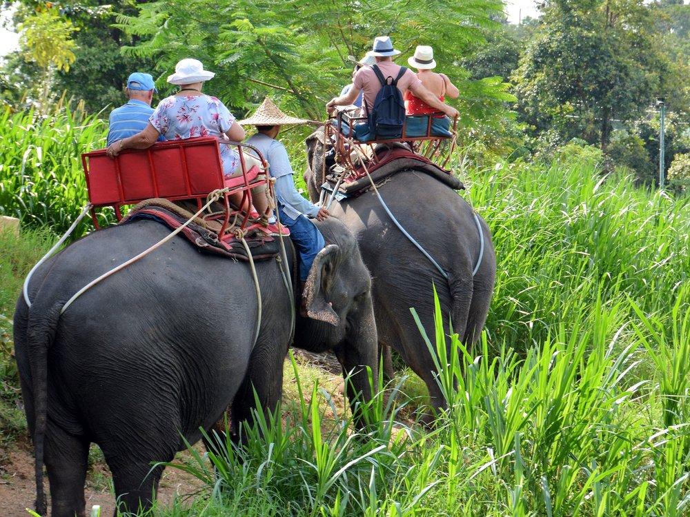 Elephant ride, Ko Samui, Thailand