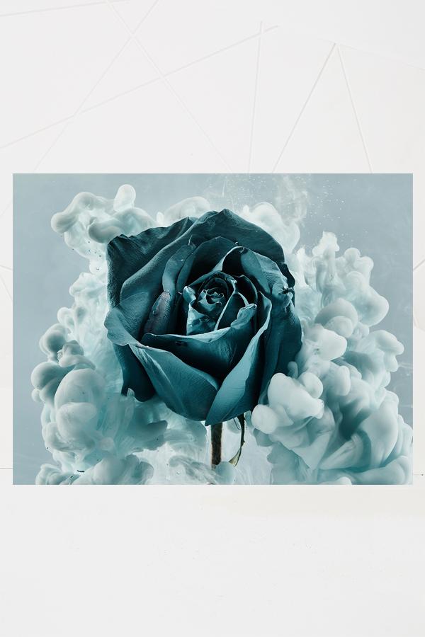 Blue Velvet VII