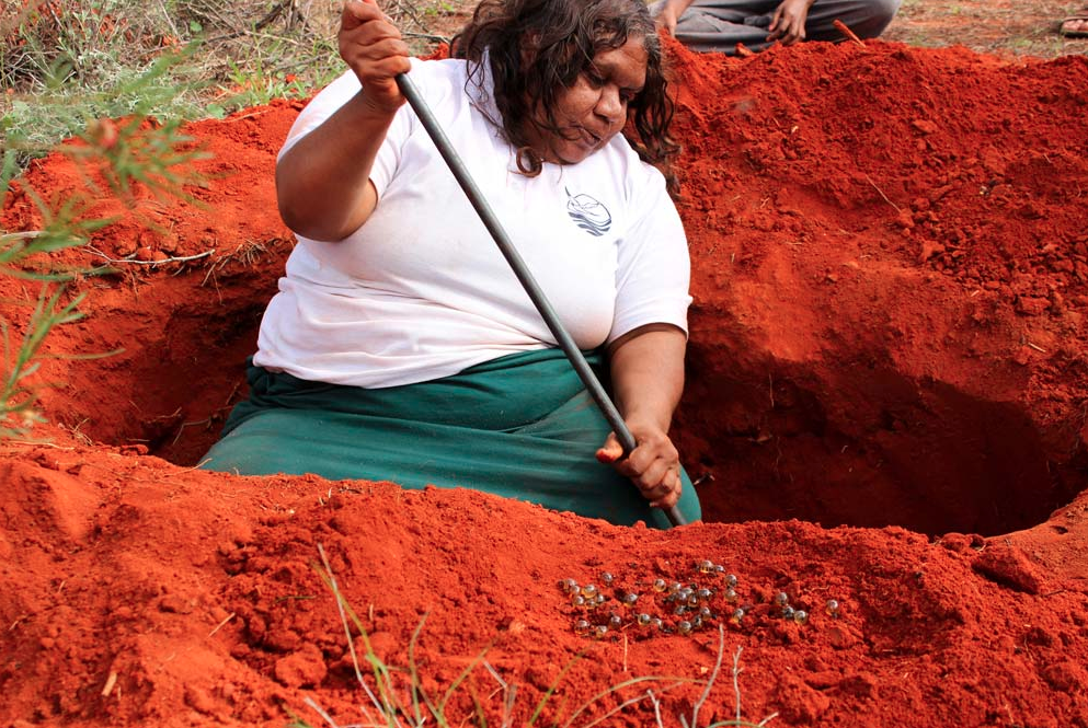 Vicki Cullinan with Tjala (honey ants).png