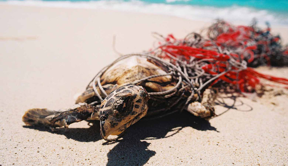 turtle large_courtesy of GhostNets Australia.jpg