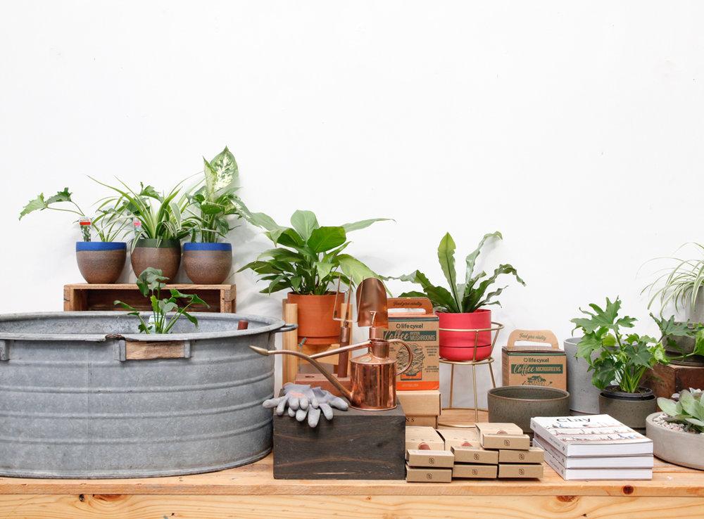 pot-plant-image.jpg