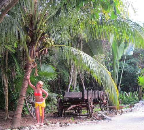 ceja-vineyards-wine-club-cruise-coconut-tree