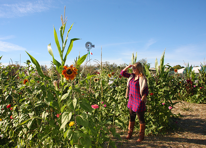 sun flowers-napa-pumpkin-patch-hello-october