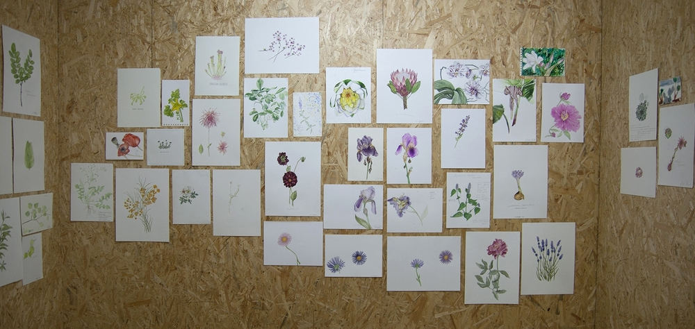 Botanical Drawing Exhibition
