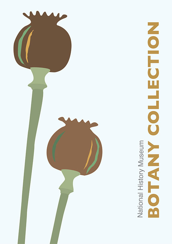 Botany Collection vector poster by Claire Clark