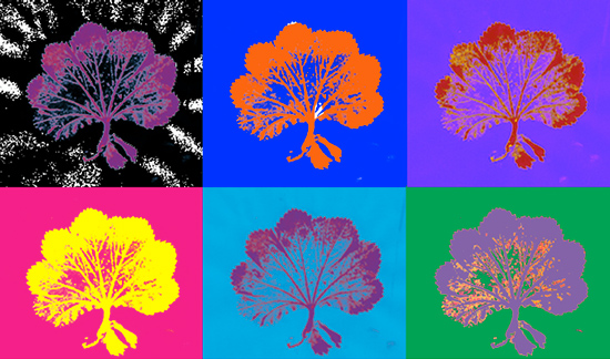 Colour changes using Alpha Channels by Lisa Brown