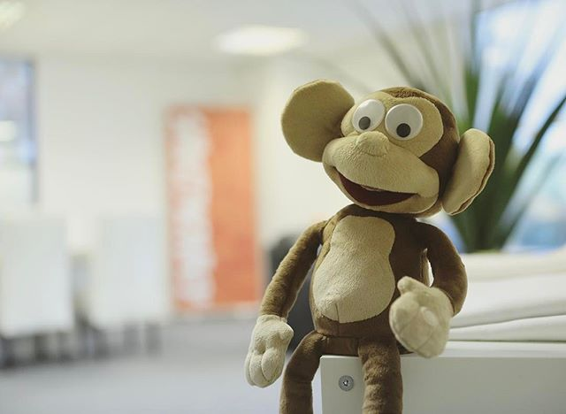 Welcoming the newest member of the Shirt Monkey Family!  We need your suggestions for a suitable name for this cheeky chappy!#shirtmonkey #monkey #namethatmonkey