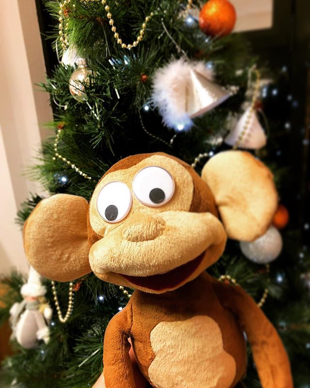 With Christmas just around the corner, Albert is getting into the spirit of it all by decorating our tree! #orangebaubles #shirtmonkey #merrychristmas
