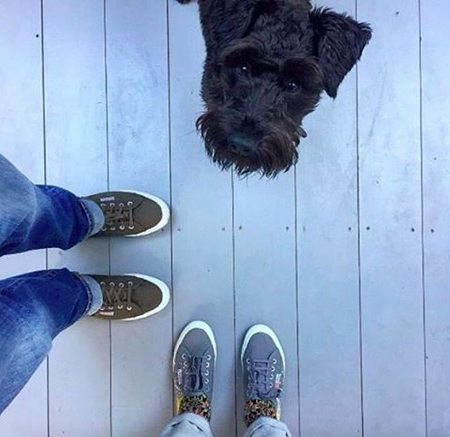 REGRAM #CoolBrand @supergauk: Looks like Superga have puppy approval for the weekend! @enbrogue @manaboutadogblog #hisandhers #supergauk #dogsofinstagram . . . . . #pursuepretty #makeyousmilestyle #petitejoys #livethelittlethings #nothingisordinary #finditliveit #thegoodlife #makeithappen #theeverygirl #peoplescreative #visualcrush #bloggervibes #flashesofdelight #livecolorfully #chasinglight #lifeofadventure #thatsdarling #darlingmovement  #cool #love #style #instacool #photogram #instadaily #igers #instalike