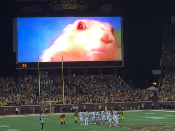 This Minnesota team have gone one further having the dramatic chipmunk behind kicks!
